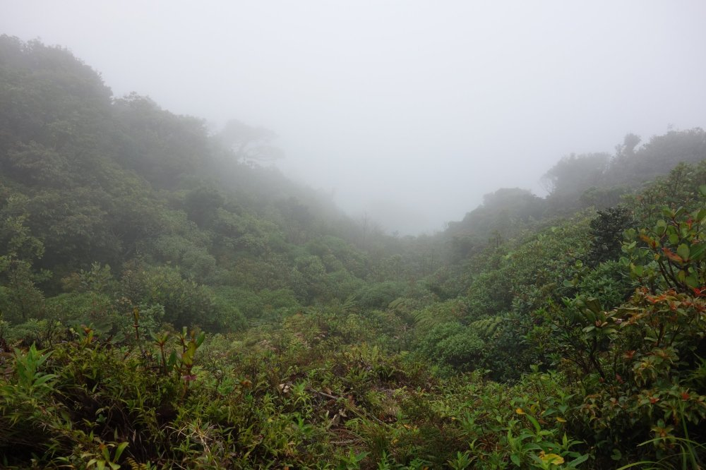 The view from the top of the Cerro Amigos consist of cloud forest, surprisingly covered in clouds.