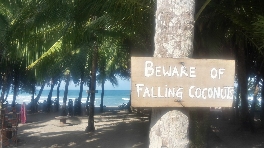 """""""Beware of falling coconuts"""" sign next to palm trees by sandy beach."""