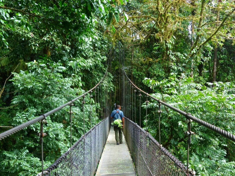 Mistico Hanging Bridges tour guide Bernado is crossing a bridge, looking for wildlife.