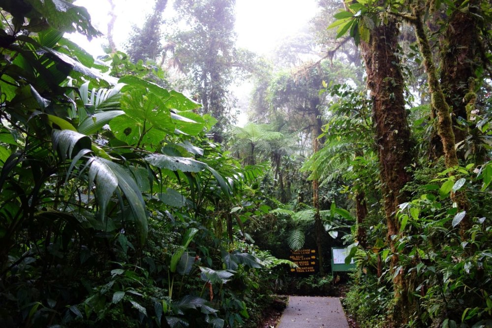 Clouds obscure much of the surroundings in the dense growth of the Santa Elena cloud forest national reserve.
